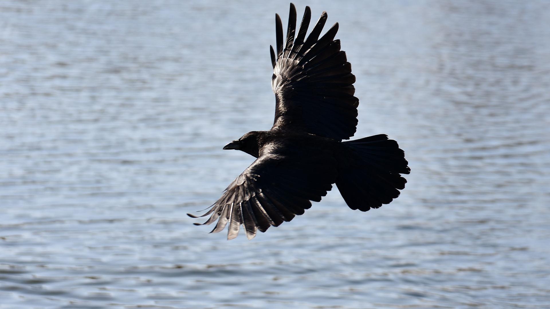 К примеру, в мифологическом соннике ворона описывается как олицетворение женщины с дурным глазом и, если спящему привиделось, что его кл.